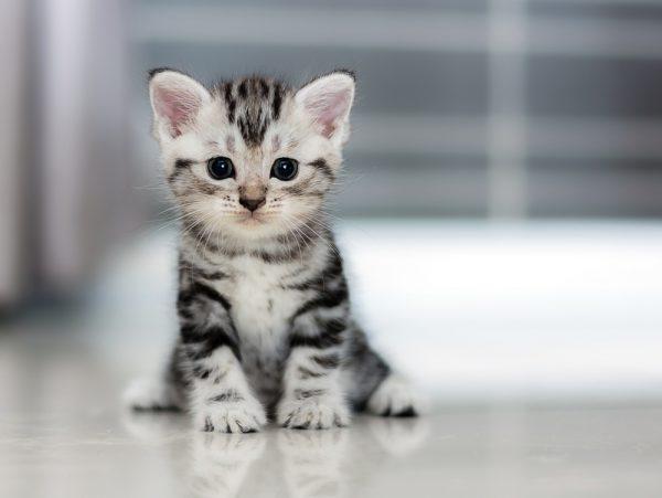 Полосатый котёнок