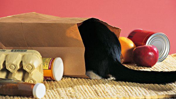 Кошка залезла в бумажный пакет
