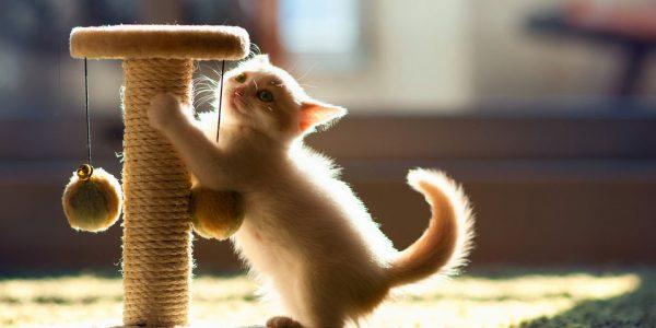 Приучаем котёнка к когтеточке