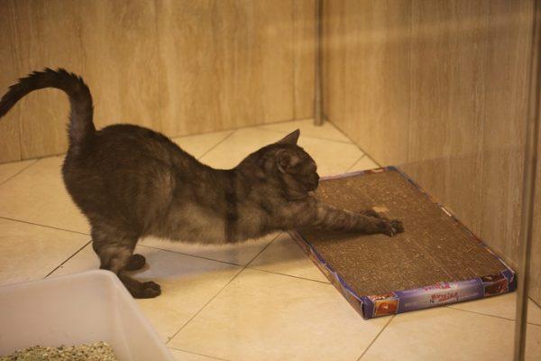 Приучаем взрослую кошку