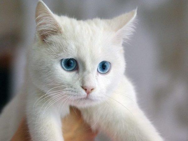 белый кот-подросток