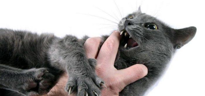 Разыгравшийся кот
