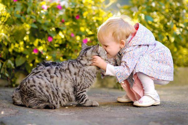 ребёнок целует кота