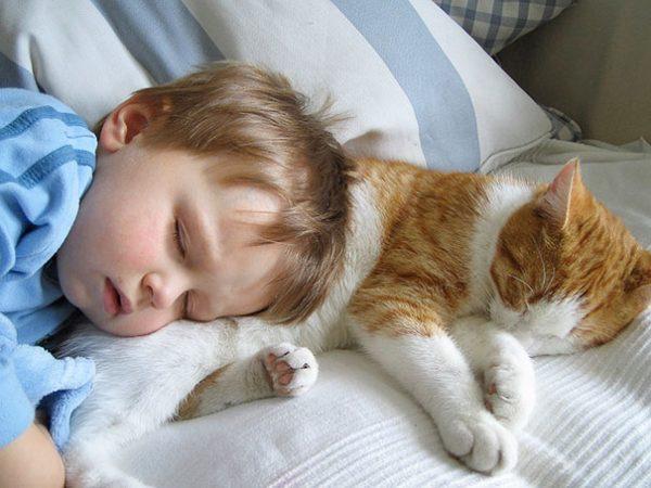 Ребёнок с котом