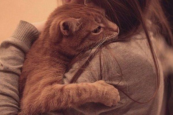 Рыжая кошка на плече девушки