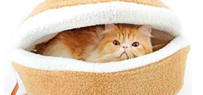 Рыжий кот в оранжевой лежанке
