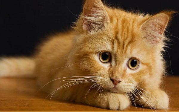 Рыжий котёнок с грустными глазами