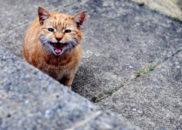 Рыжий уличный кот