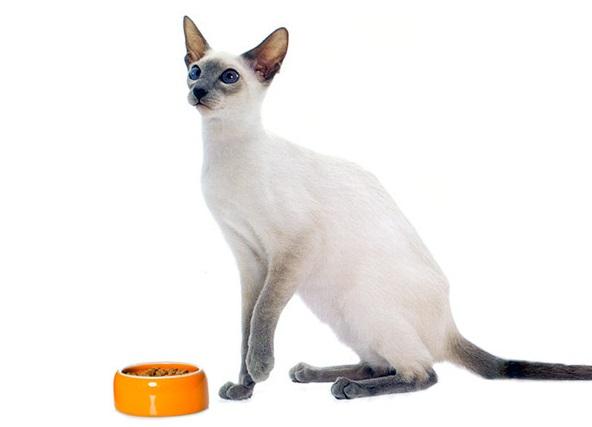 Кошка и миска с кормом