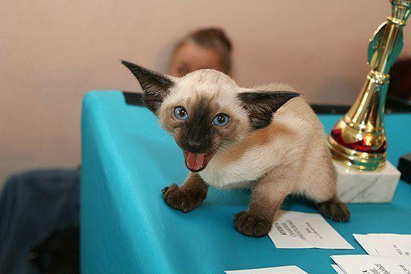 Котёнок на столе