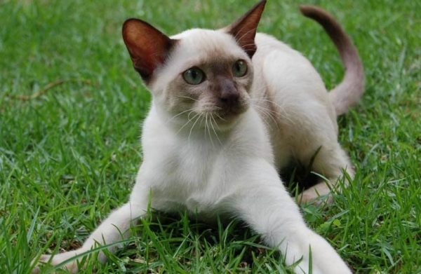 Котик на траве