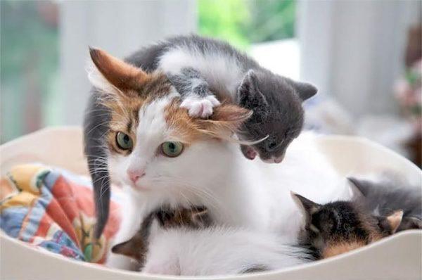 Кошка с котёнком, который забрался ей на голову