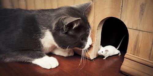 Серая кошка и белая мышь