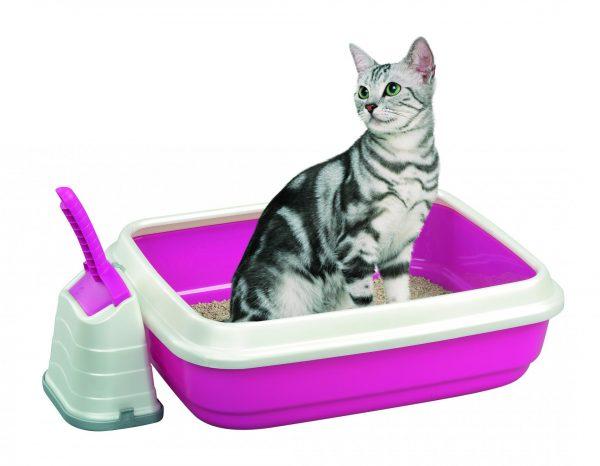 серая полосатая кошка в розовом лотке
