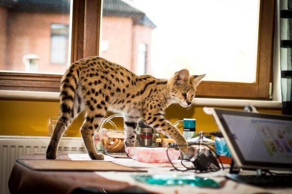 сервал на столе рядом с ноутбуков