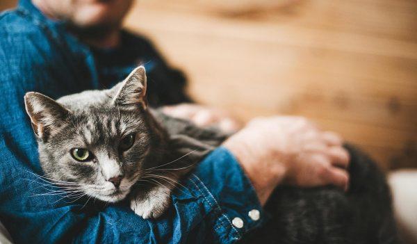 серый кот на руках у мужчины
