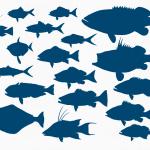 шаблон «рыбки»
