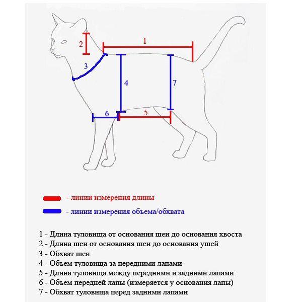 схема снятия мерок с кошки