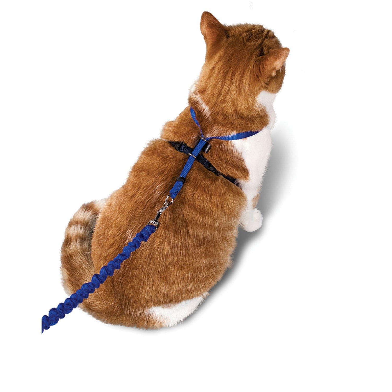 поводок для котов картинки ребус
