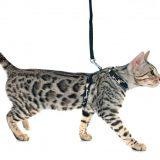 Шлейка для кота