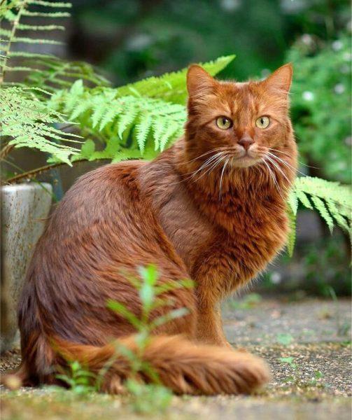 Сомалийская кошка под листьями папоротника