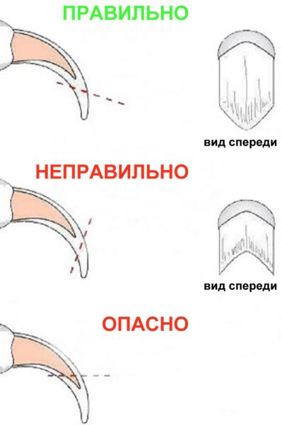 схема срезания когтя с правильным и опасным расположением инструмента