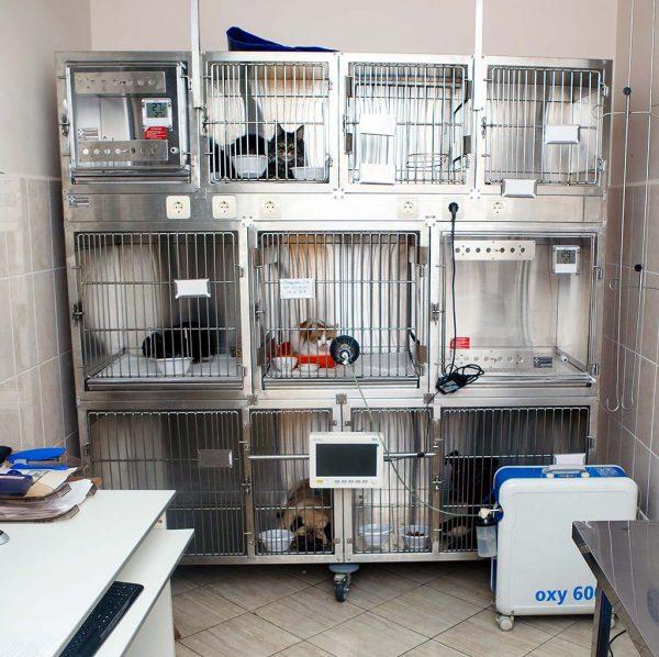 Стационар для животных внутри ветклиники
