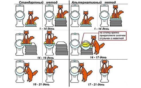 Стандартный способ приучения кота к унитазу