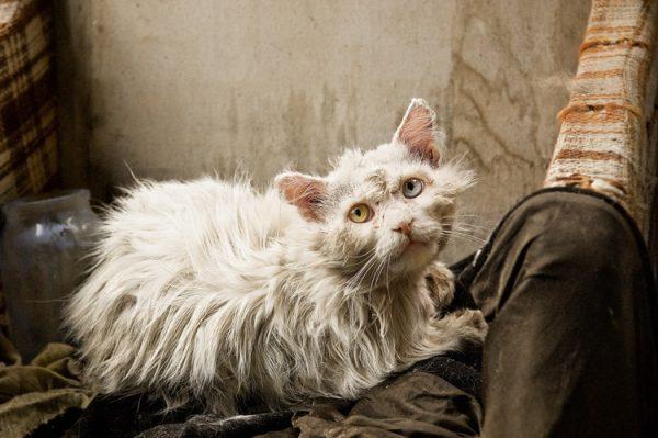 Старый белый кот лежит