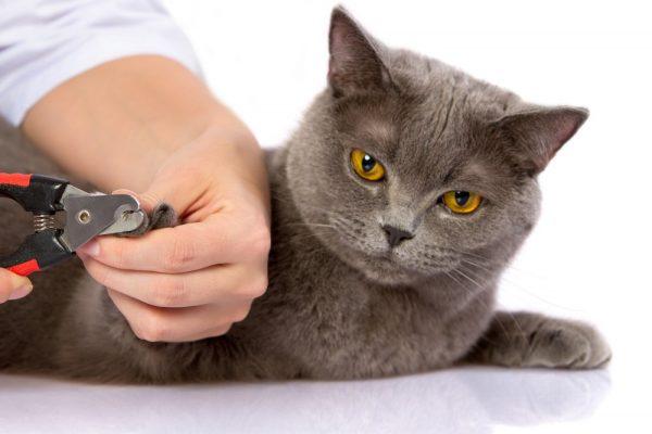 стрижка когтей коту