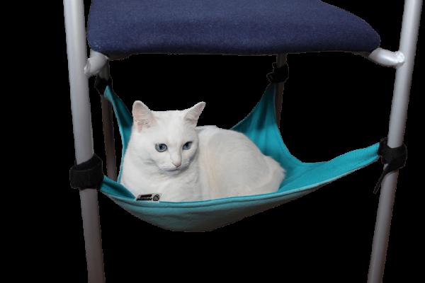 Светлый кот на гамаке бирюзового цвета