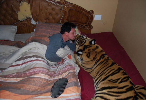 Тигр в спальне