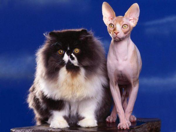 Толстый и худой котенок