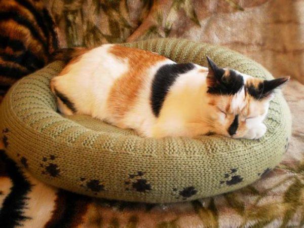 трёхцветный кот на вязаной лежанке цвета хаки