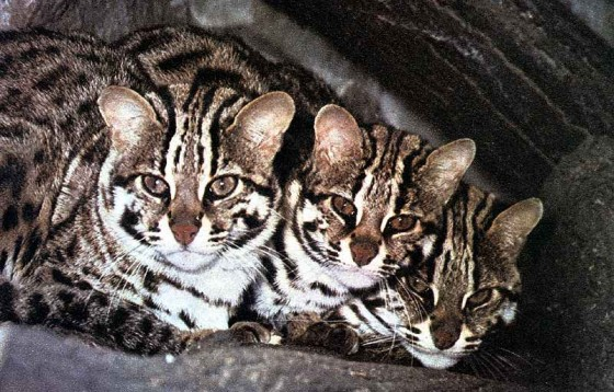 Три кота-рыболова