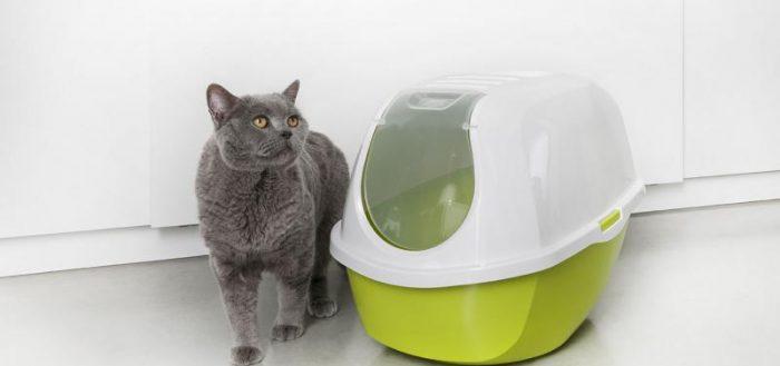 Туалет-домик для кошек