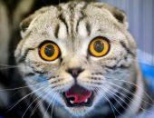 Удивлённая морда кота