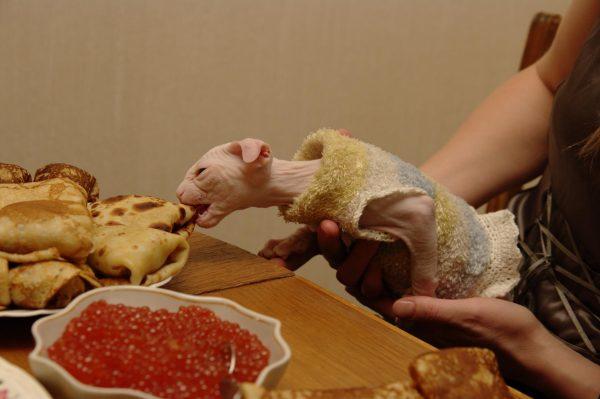 Украинский левкой ест блины