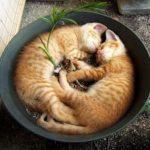 Котята спят в обнимку