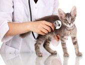 Ветеринар осматривает котёнка