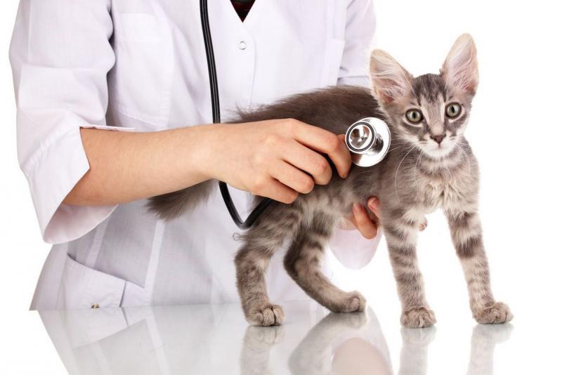 Стерилизация кошки: что это такое и какие нюансы надо знать