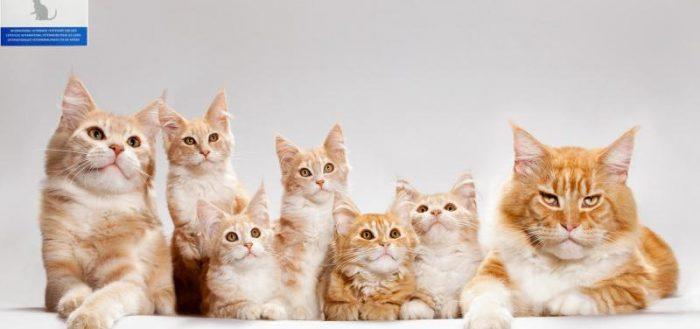 Ветпаспорт кошки