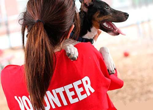 Волонтёр с собакой