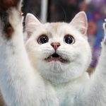 Котёнок на задних лапах