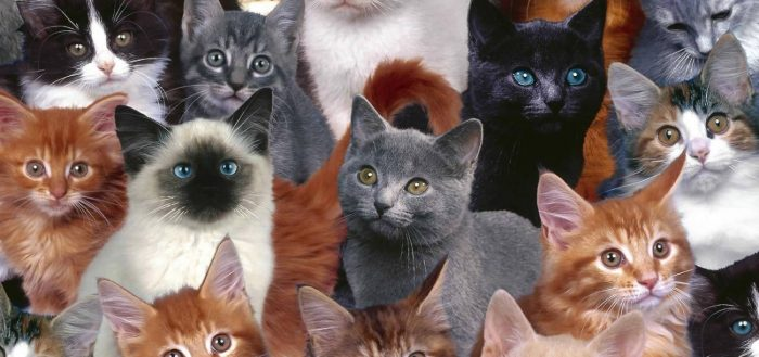выбор кошки или кота