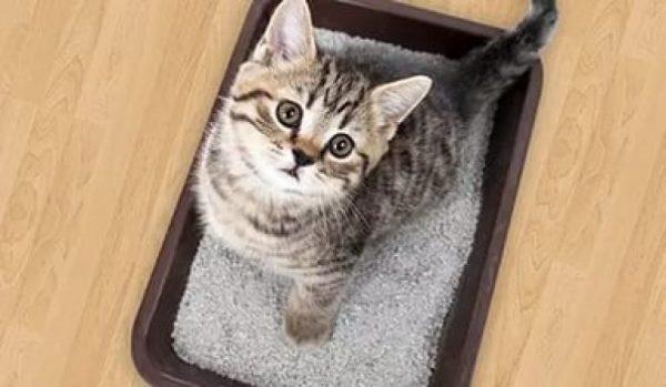 Высокие лотки неудобны для маленьких котят