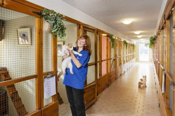 Работница зоогостиницы с котом