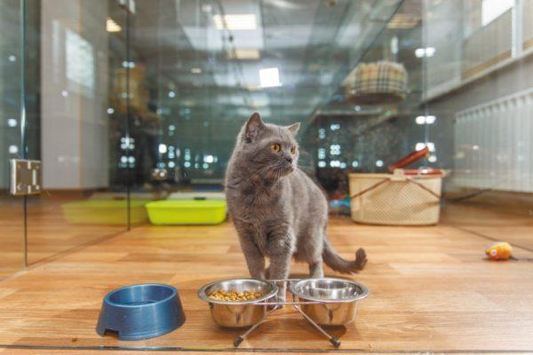 Серый кот стоит у мисок