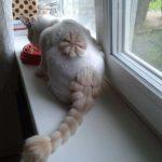 Кошка со стрижкой с цветко м