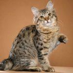 Здоровающийся кот